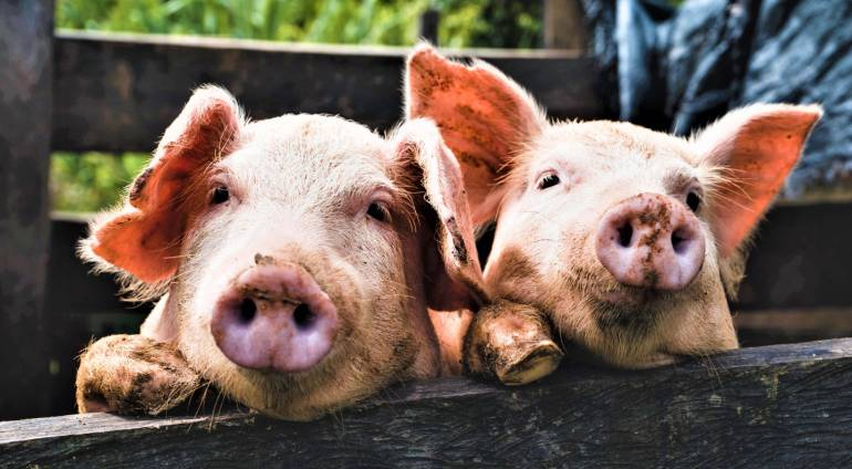 Pig and Gas Project